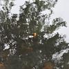 4-22-2012 Raffaldini Vineyards 127