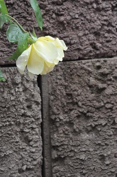 4-22-2012 Raffaldini Vineyards 078
