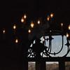 11-3-2012 Raffaldini Vineyard 081