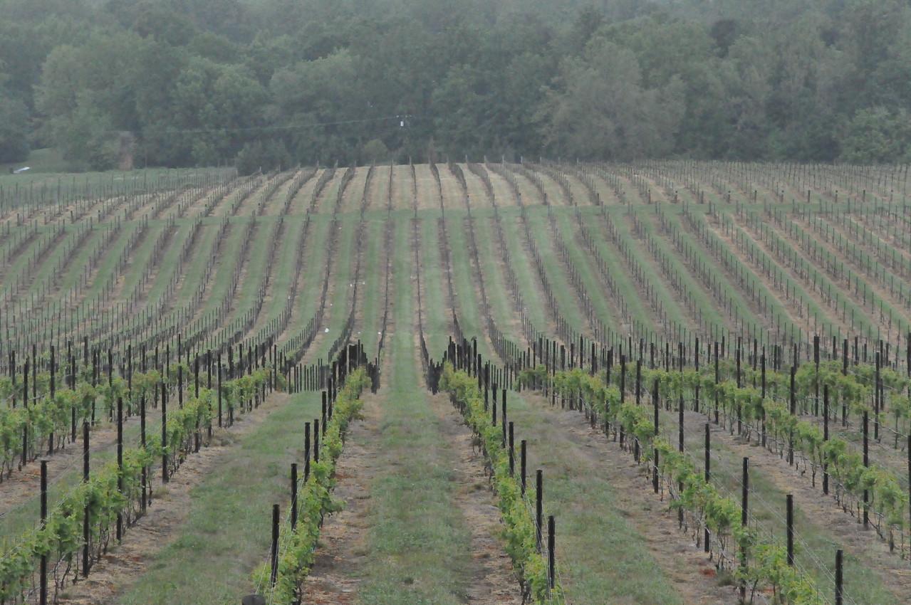 4-22-2012 Raffaldini Vineyards 023