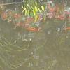 8-13-2011 Raffaldini Vineyard 239