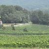 8-13-2011 Raffaldini Vineyard 036