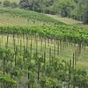 8-13-2011 Raffaldini Vineyard 032