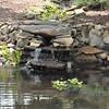 8-13-2011 Raffaldini Vineyard 218