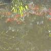 8-13-2011 Raffaldini Vineyard 241