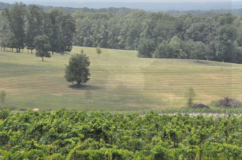 8-13-2011 Raffaldini Vineyard 041