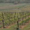 4-22-2012 Raffaldini Vineyards 002