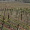 4-22-2012 Raffaldini Vineyards 004