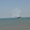 Seagulls 5-13-2010 013