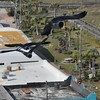 Seagulls 5-13-2010 017
