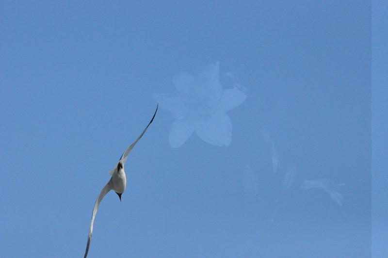 Seagulls 5-13-2010 054