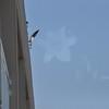 Seagulls 5-13-2010 063