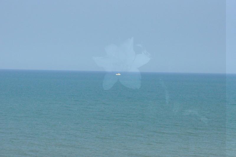 Seagulls 5-13-2010 009