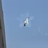Seagulls 5-13-2010 061
