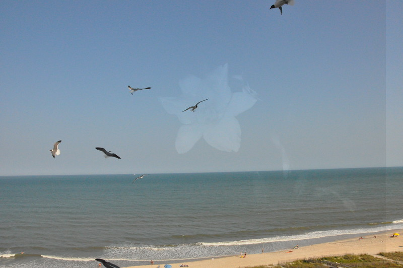 Seagulls 5-13-2010 040
