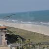 Seagulls 5-13-2010 059