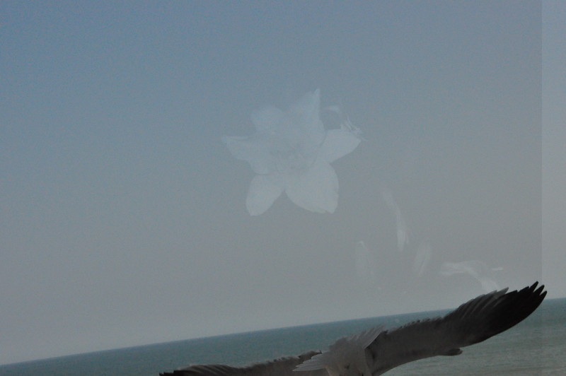 Seagulls 5-13-2010 037