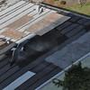 Seagulls 5-13-2010 074