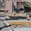 Seagulls 5-13-2010 014
