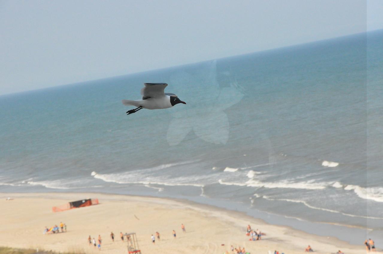 Seagulls 5-13-2010 067