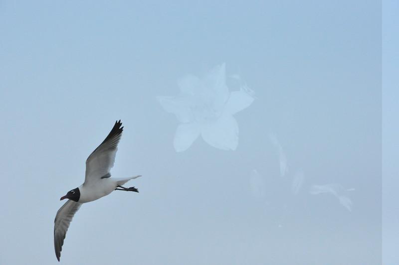 Seagulls 5-13-2010 071