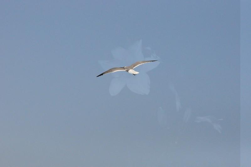 Seagulls 5-13-2010 073