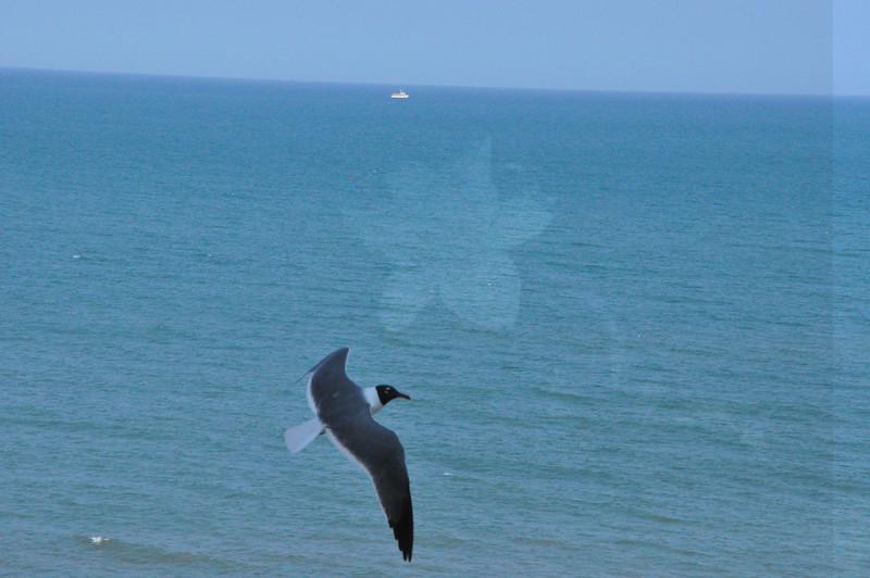 Seagulls 5-13-2010 077