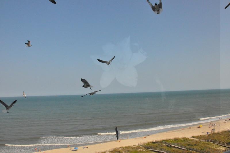 Seagulls 5-13-2010 039