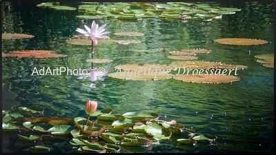 Sara P. Duke Gardens, Durham NC.