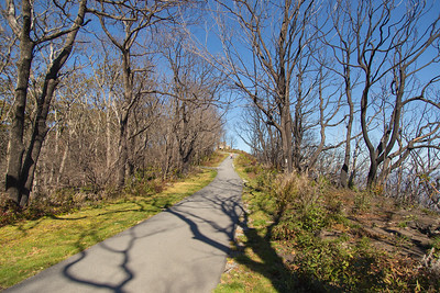 The Appalachian Trail approaching the Wayah Bald summit.  The trees were burned in a wildfire a year ago,;their spindly shapes linger on, forming an intricate border and canopy for the trail.