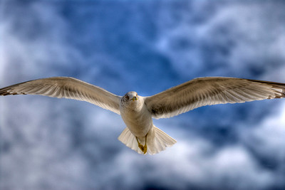 A gull on a cloudy day in Wrightsville Beach, NC on Saturday, February 25, 2012. Copyright 2012 Jason Barnette