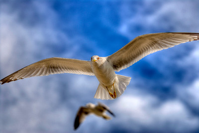 Gulls fly overhead in Wrightsville Beach, NC on Saturday, February 25, 2012. Copyright 2012 Jason Barnette