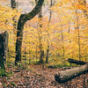 A Sea of Yellow & The Floating Log