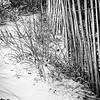 Wrightsville Beach, North Carolina, January 2009