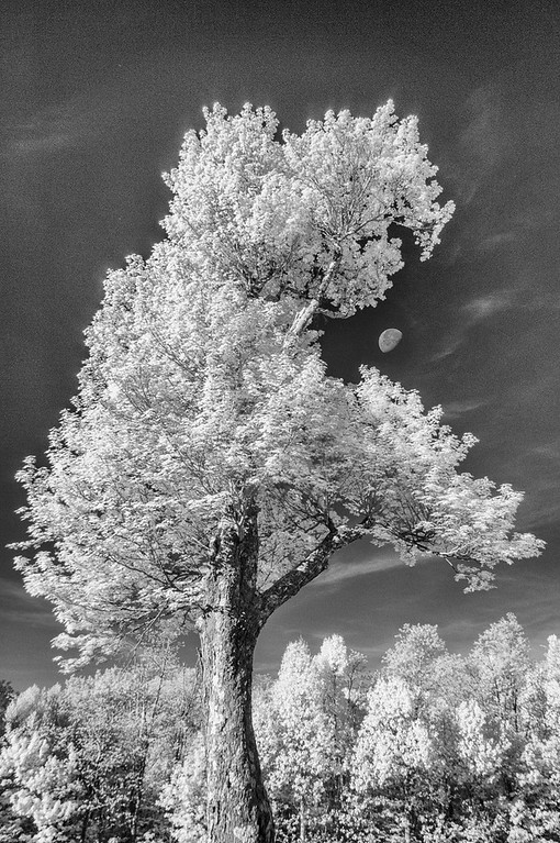Infrared Tree with Moon