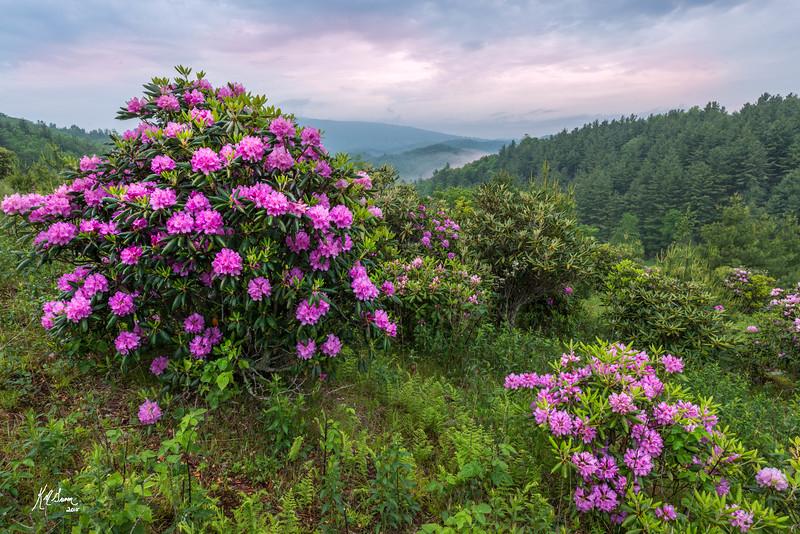 Spring Abundance