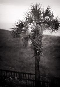 North Myrtle Beach 2014 (159)-Editsepia 300