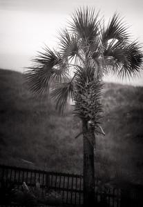 North Myrtle Beach 2014 (159)-Editsepia 300