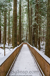 A snow covered boardwalk through a forest