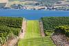 Vineyard - Lake Chelan 107