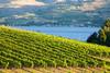 Vineyard - Lake Chelan 100