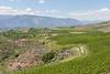 Lake Chelan Orchards 20