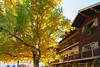 Leavenworth Autumn 11