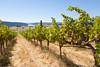 Vineyard - Ancient Lakes 132