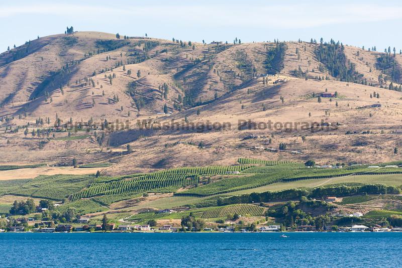 Vineyard - Lake Chelan 114