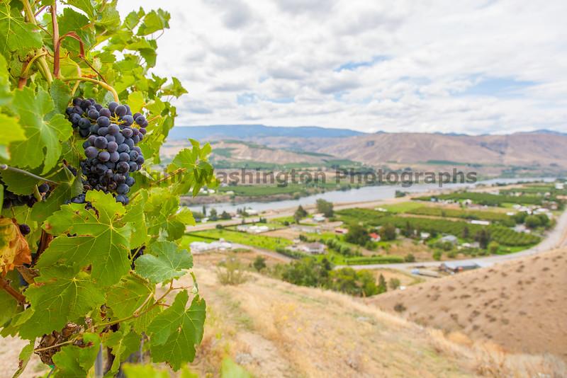 Vineyard - Columbia Valley 122