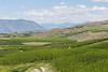 Lake Chelan Orchards 14