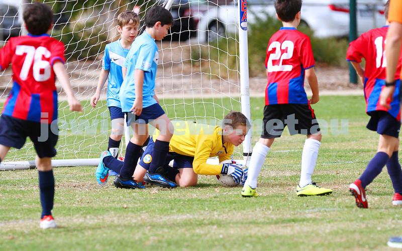 12-4-15. Soccer. North Caulfield Junior Football Club. U 11 Eagles v Port Melbourne Sharks. Caulfield parl. Photo: Peter Haskin