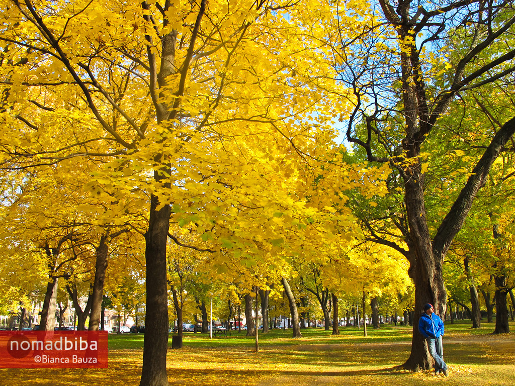 Hanging out at the park in Montreal QC, Canada