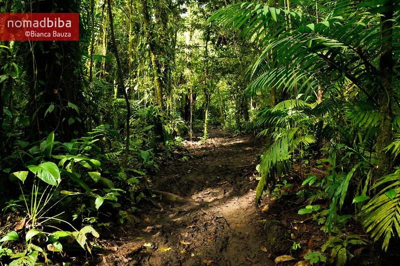 Trail near La Fortuna, Costa Rica
